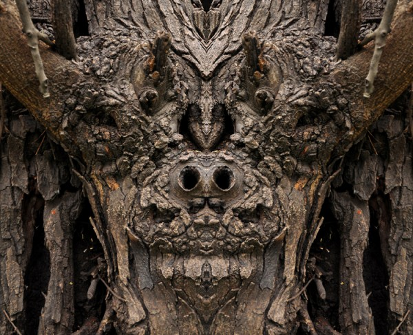 bucktoothed tree monster