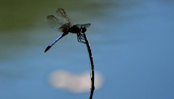 dragonflyonastick