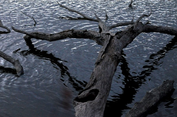wood and ripples