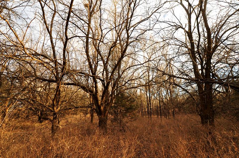 brown woods 2