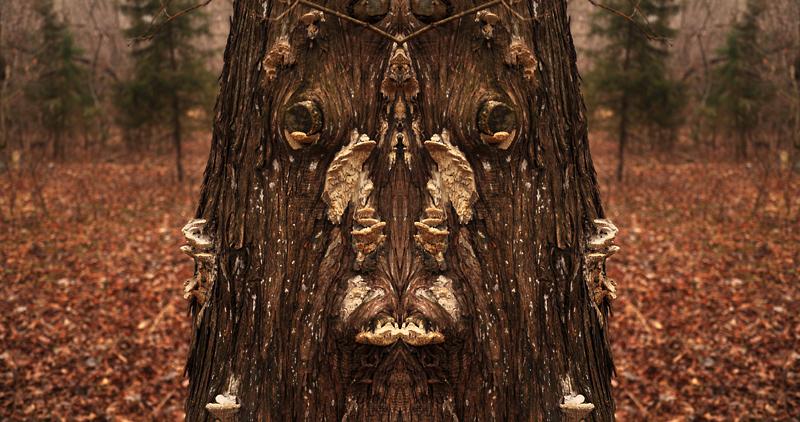 fungus face