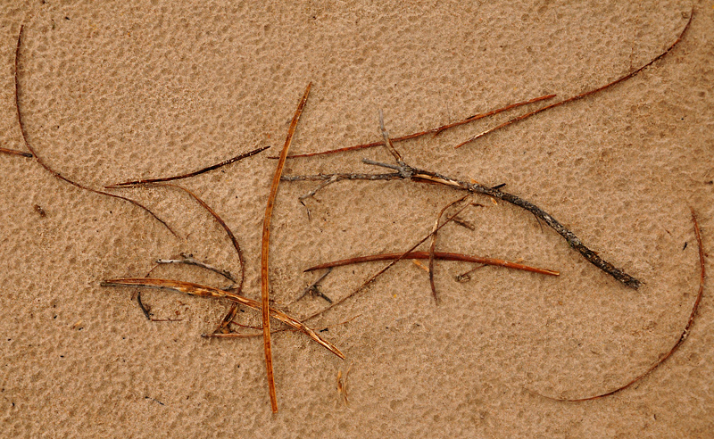 Twigs on the sand