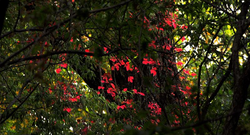 splashes of red